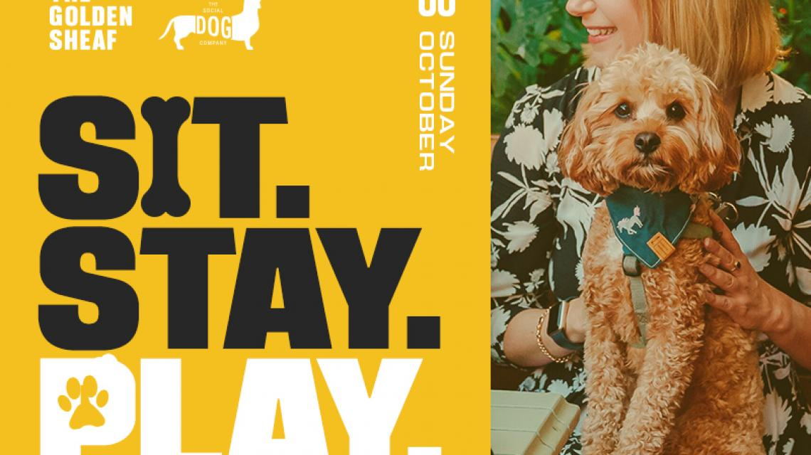 Sheaf sit stay play dog event